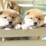 犬用の薄型ペットシーツは楽天で買うのが安いしおすすめなワケ!